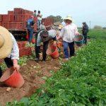 Μείωση παρουσίασε το αγροτικό εισόδημα τον Απρίλιο του 2016