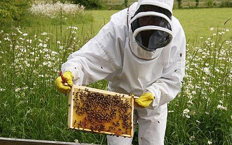 24/06/08  Bee keeping course at Littlecote House in Berkshire. Teresa Machan and Steve Conway are shown the hives by bee keeper Rosemary Proud (upright head protector) at her property near Lambourn, Berkshire. Picture: John Lawrence 07850 429934