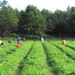 670.000 στρέμματα δημόσιας γης σε 30.000 αγρότες