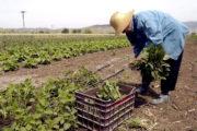 Παράταση μέχρι το 2025 για αγρότες