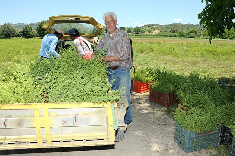 aroma-farms3