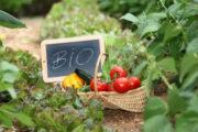 Ολοκληρώθηκε στην Ηλεια η διαδικασία πληρωμών για βιολογική γεωργία 2014