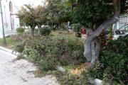 Υπηρεσία Καθαριότητας Δήμου Ήλιδας: «Απαιτείται ενημέρωση για τα κλαδέματα πριν την εναπόθεση»