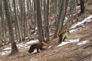 Ήρθε η άνοιξη... ξύπνησαν οι αρκούδες [ΦΩΤΟ]