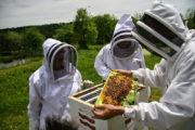 ΔΑΟΚ Ηλείας: Δήλωση κυψελών διαχείμασης και Μελισσοκομικό Πρόγραμμα 2019