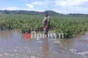 Καλοκαίρι-εφιάλτης για τους αγρότες του κάμπου  Πνίγηκαν οι  καλλιέργειες-Χάνεται η παραγωγή fa4b0ccc1a3
