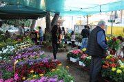 «Άνθισε» η πλατεία Ανεμόμυλου!: Χρώματα, αρώματα και εκδηλώσεις στην 19η Ανθοκομική έκθεση Αμαλιάδας