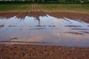 Σποραδικές ζημιές από την νεροποντή στον αγροτικό τομέα