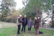 Αυτοψία από γεωλόγο του ΙΓΜΕ στο Λόφο του Επαρχείου για την αντιμετώπιση της πτώσης των πεύκων